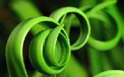 thumb made with epeg