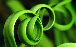 thumb made with ImageMagick
